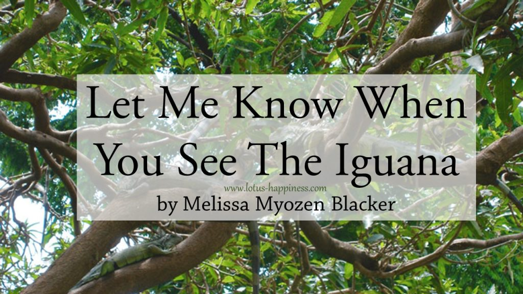 let-me-know-when-you-see-the-iguana
