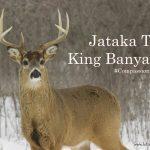 Jataka Tale: King Banyan Deer