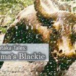 Jataka Tales: Grandma's Blackie