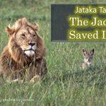Jataka Tales : The Jackal Saved Lion