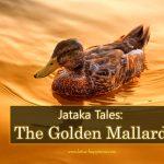 Jataka Tales: The Golden Mallard